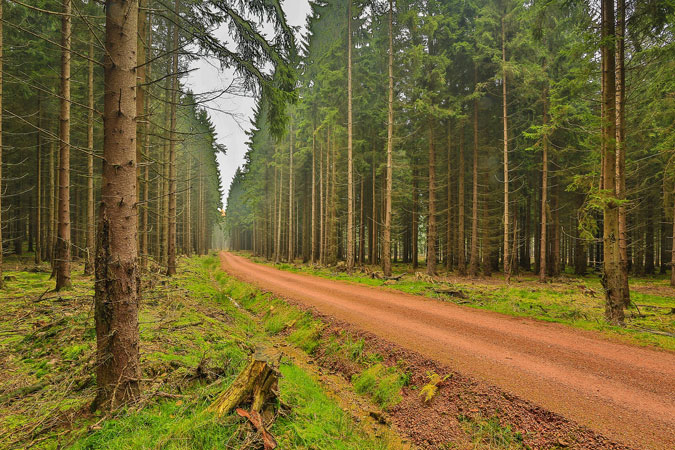c349c8f6ec1 Brdští lesníci budou chránit lesy před kůrovcem společně